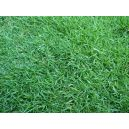 200 sq ft Grass Planting Service (Japanese Pearl Grass)